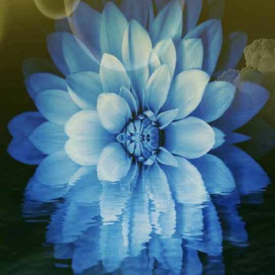 Flower sea Android SmartPhone Wallpaper