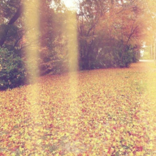 Autumn leaves fallen leaves Android SmartPhone Wallpaper