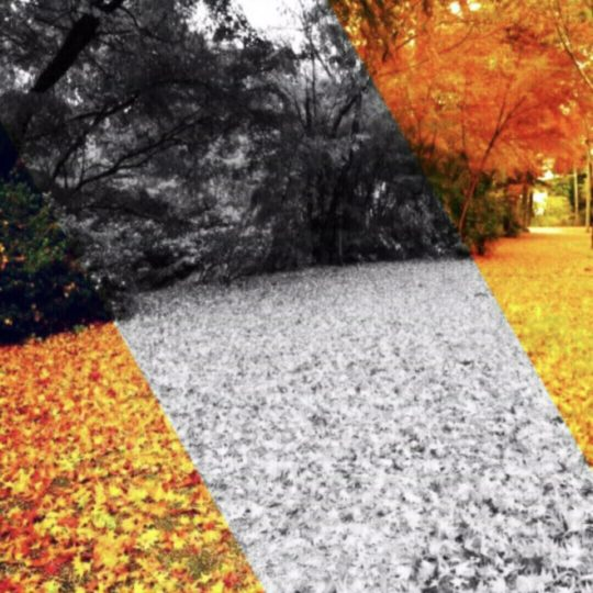 Tree fallen leaves Android SmartPhone Wallpaper