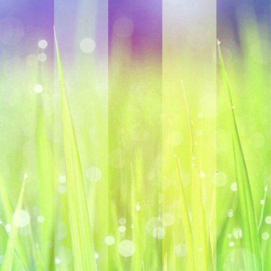 Grassy light Android SmartPhone Wallpaper