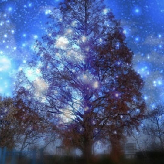 Tree night sky Android SmartPhone Wallpaper
