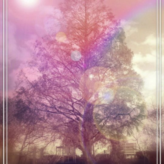 tree park Android SmartPhone Wallpaper