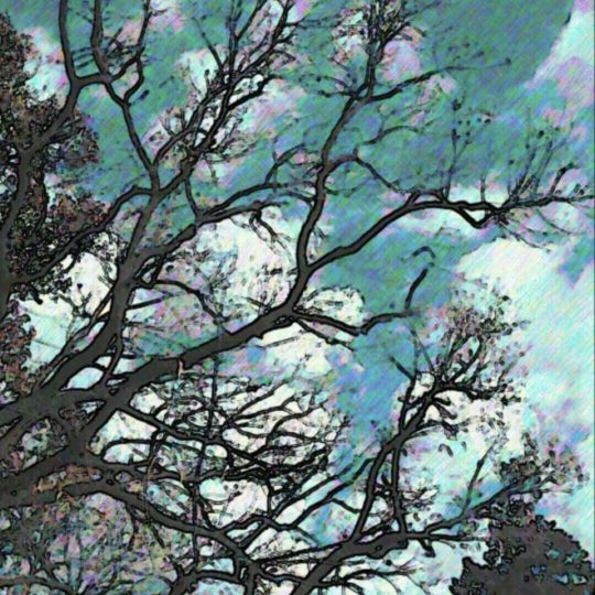 tree sky Android SmartPhone Wallpaper