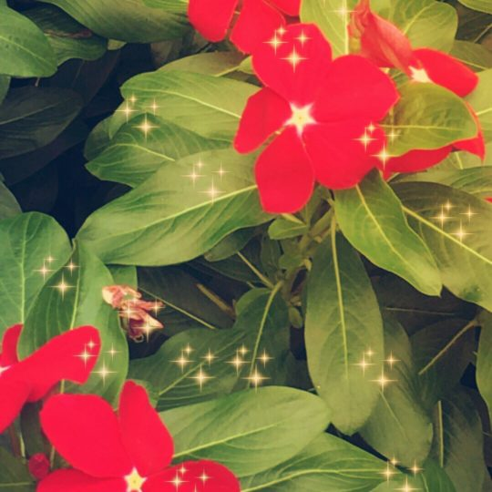 Flower light Android SmartPhone Wallpaper