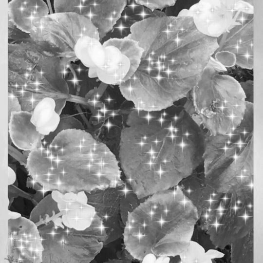 Flower black and white Android SmartPhone Wallpaper