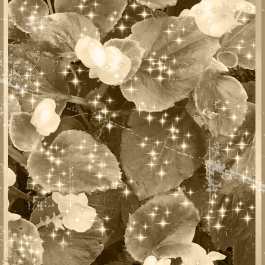 Flower sepia Android SmartPhone Wallpaper