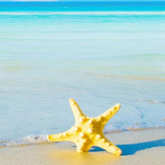landscape  sea  starfish Android SmartPhone Wallpaper