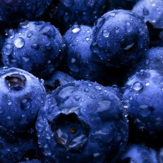 Food berry blue Android SmartPhone Wallpaper