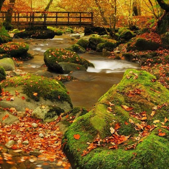 Landscape autumn leaves Android SmartPhone Wallpaper