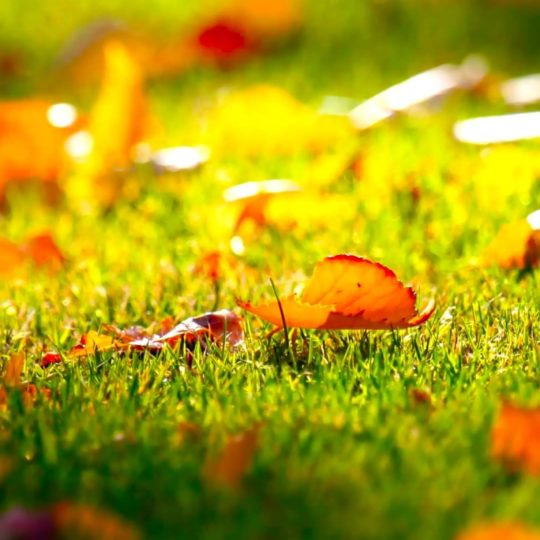 Natural orange fallen leaves green Android SmartPhone Wallpaper