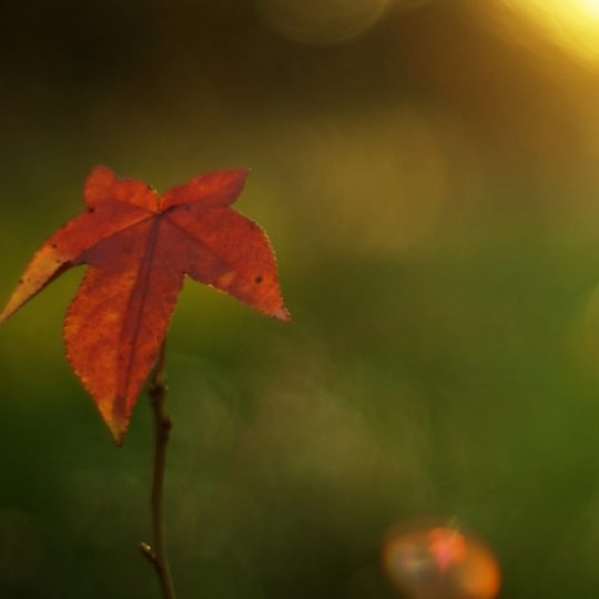 Natural orange autumn leaves Android SmartPhone Wallpaper