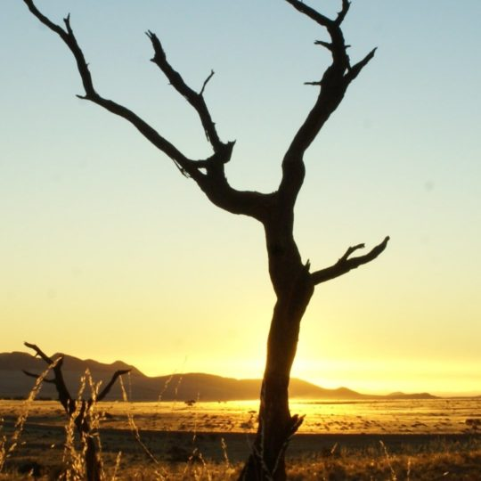 Landscape dead tree Android SmartPhone Wallpaper