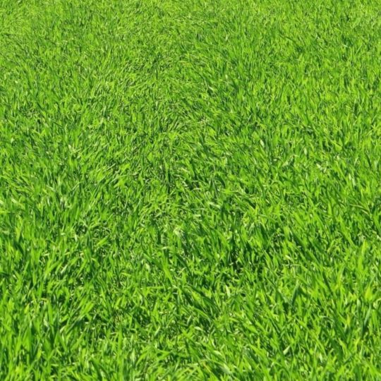 Natural lawn green Android SmartPhone Wallpaper