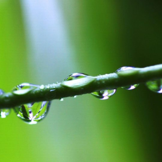 Natural water drops green Android SmartPhone Wallpaper