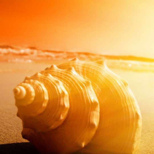 Landscape seashell Android SmartPhone Wallpaper