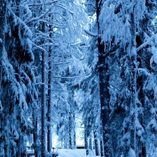 Tree-lined landscape snow Android SmartPhone Wallpaper
