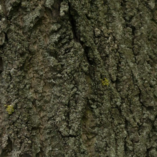 Tree moss green brown Android SmartPhone Wallpaper