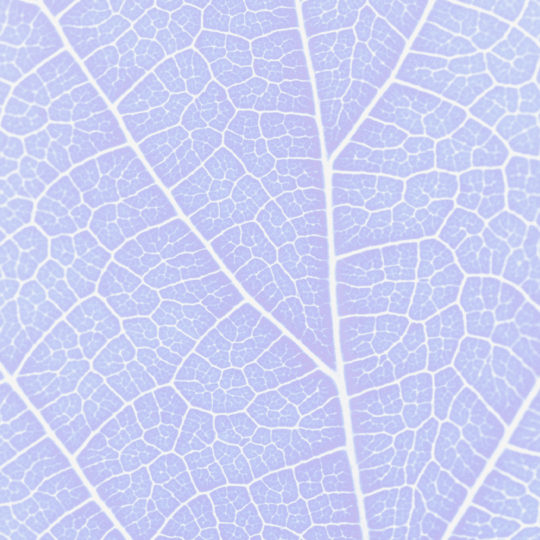 Pattern vein Blue purple Android SmartPhone Wallpaper