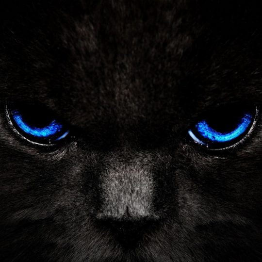Cat black cat Android SmartPhone Wallpaper