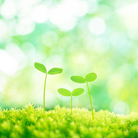 Natural Me green Android SmartPhone Wallpaper