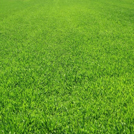 Landscape lawn green Android SmartPhone Wallpaper