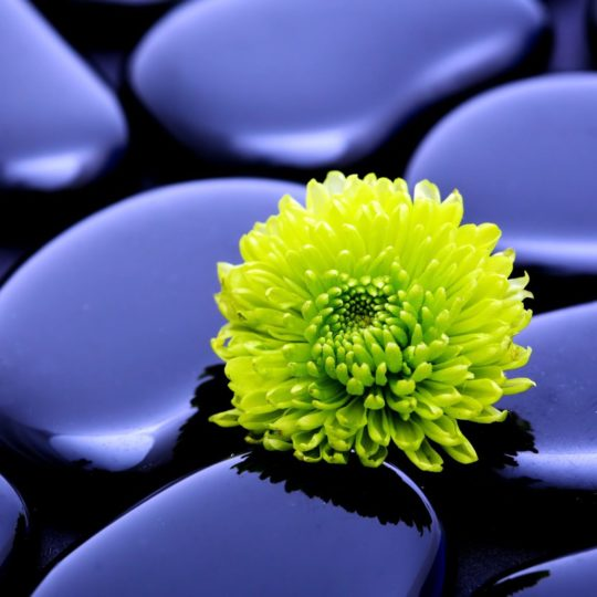 Natural  flower  green  purple Android SmartPhone Wallpaper