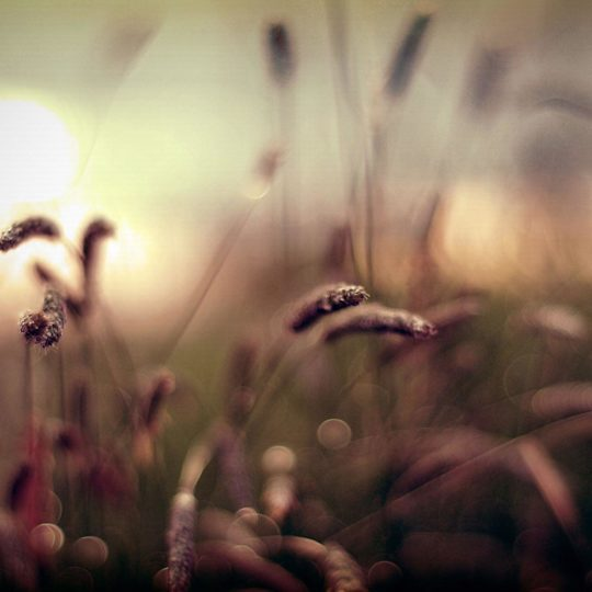 Natural grass Android SmartPhone Wallpaper