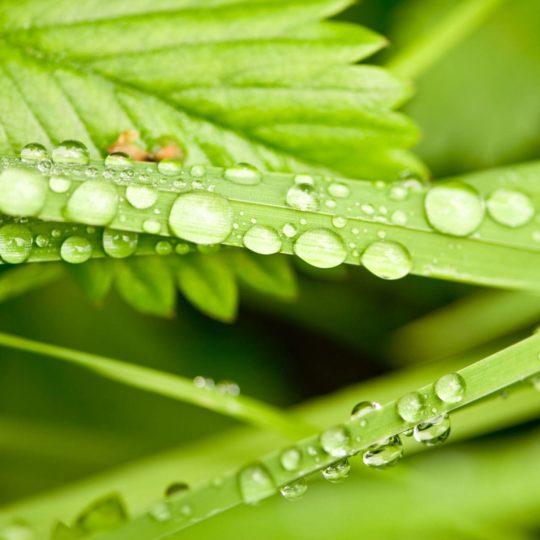 Natural chloroplast Android SmartPhone Wallpaper