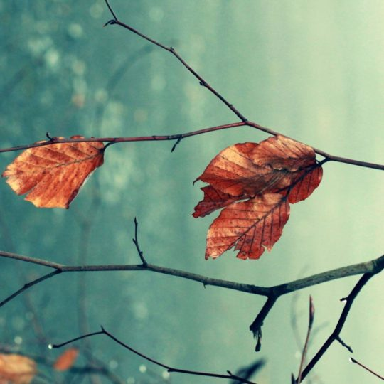 Natural dead leaf tea Android SmartPhone Wallpaper