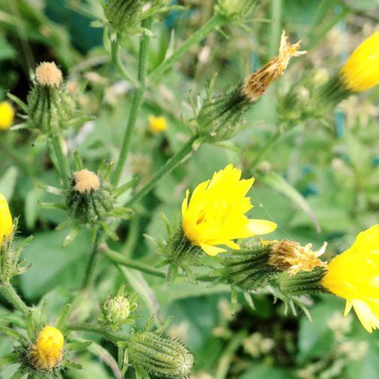 Natural  flower ki Android SmartPhone Wallpaper
