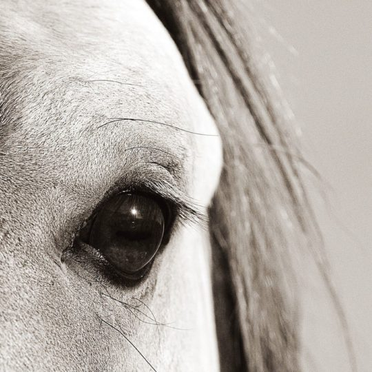 Animal horse Android SmartPhone Wallpaper