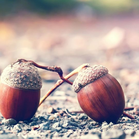 Acorn blurred landscape Android SmartPhone Wallpaper