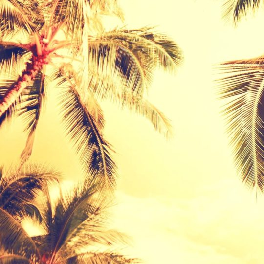 Tree landscape palm Android SmartPhone Wallpaper