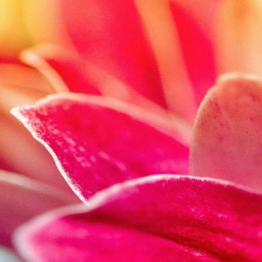 Landscape blur flower Android SmartPhone Wallpaper