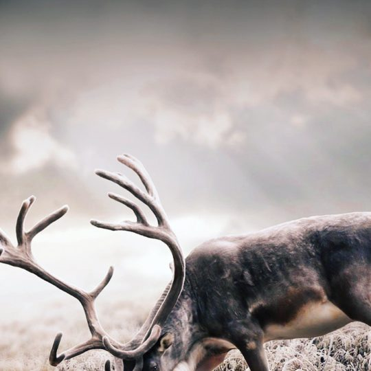 Animal deer Android SmartPhone Wallpaper