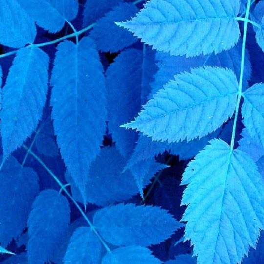 blue ba Cool Android SmartPhone Wallpaper