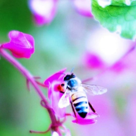 Bee blur flower nature Android SmartPhone Wallpaper