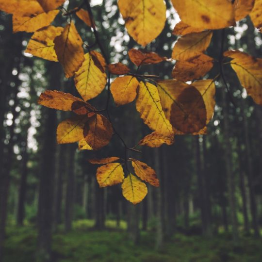 Landscape forest leaf yellow Android SmartPhone Wallpaper