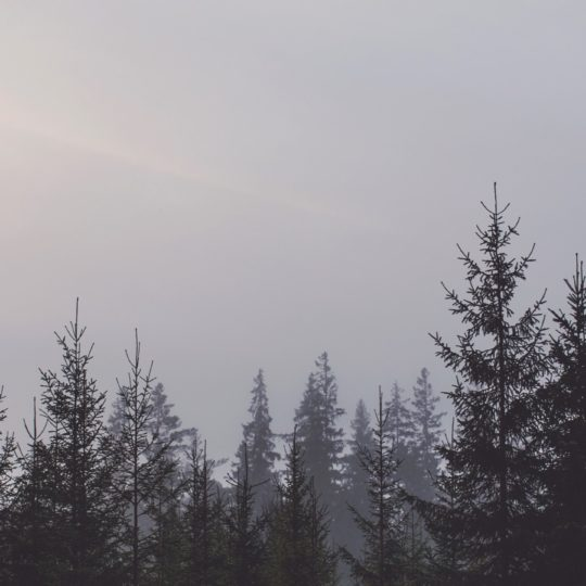 Landscape forest Android SmartPhone Wallpaper