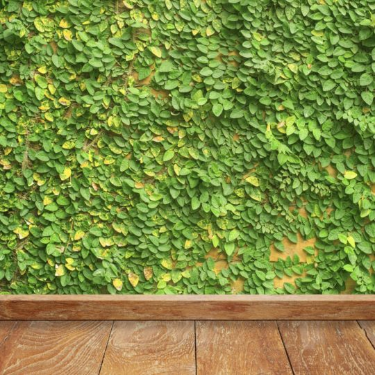 Green wall ivy floorboards Android SmartPhone Wallpaper
