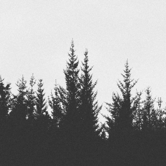 Landscape forest monochrome Android SmartPhone Wallpaper