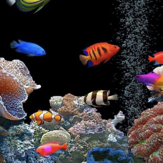 Aquarium tank colorful Android SmartPhone Wallpaper