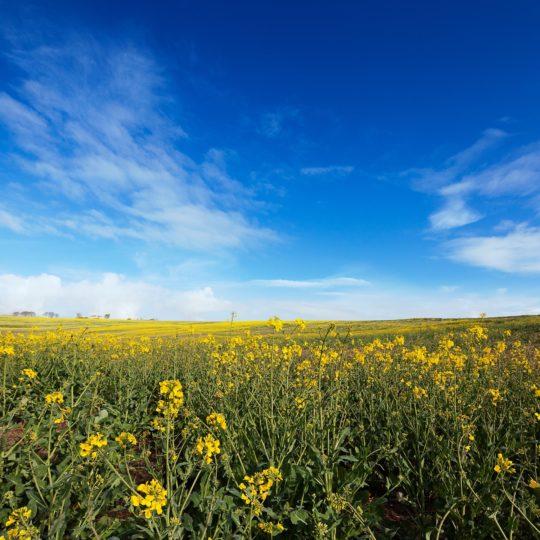 Landscape flower garden Android SmartPhone Wallpaper