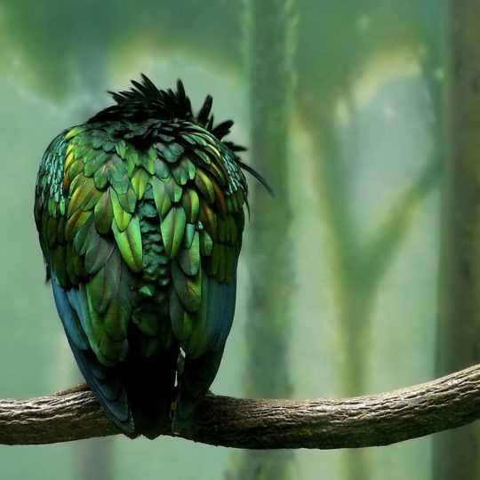 Animals Birds green Android SmartPhone Wallpaper