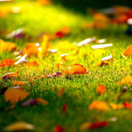 Natural fallen leaves Android SmartPhone Wallpaper