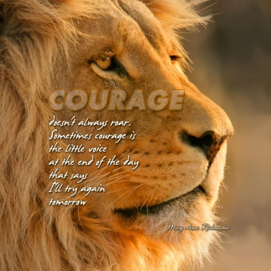 Animal lion text Android SmartPhone Wallpaper