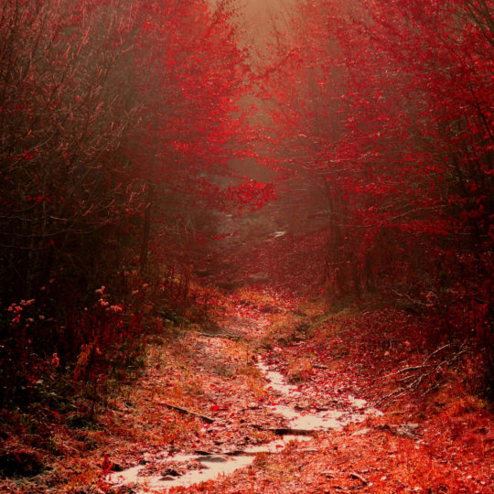 Landscape autumn leaves red Android SmartPhone Wallpaper