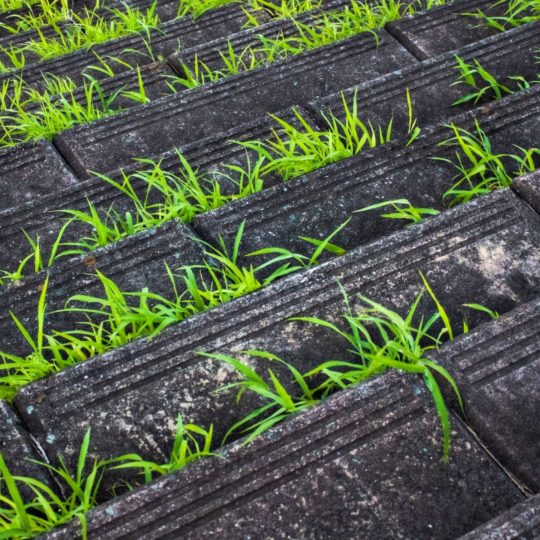 Landscape stairs grass Android SmartPhone Wallpaper