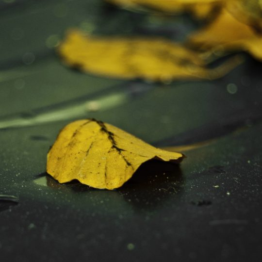 Natural yellow fallen leaves Android SmartPhone Wallpaper