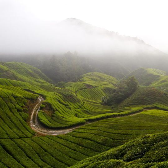 Scenery  mountain  green Android SmartPhone Wallpaper